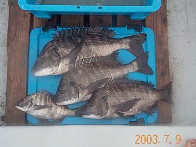 20030709-1.jpg