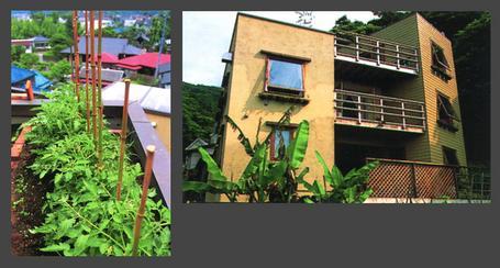 hayamaneko_facade.jpg